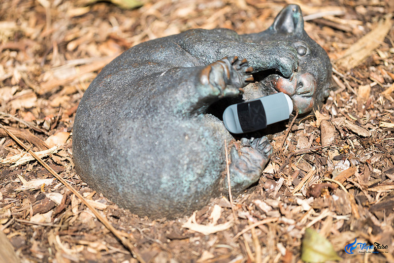 PUFFiT X Air Forced Portable Vaporizer and a wombat